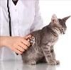 Ветеринарные клиники в Тырныаузе